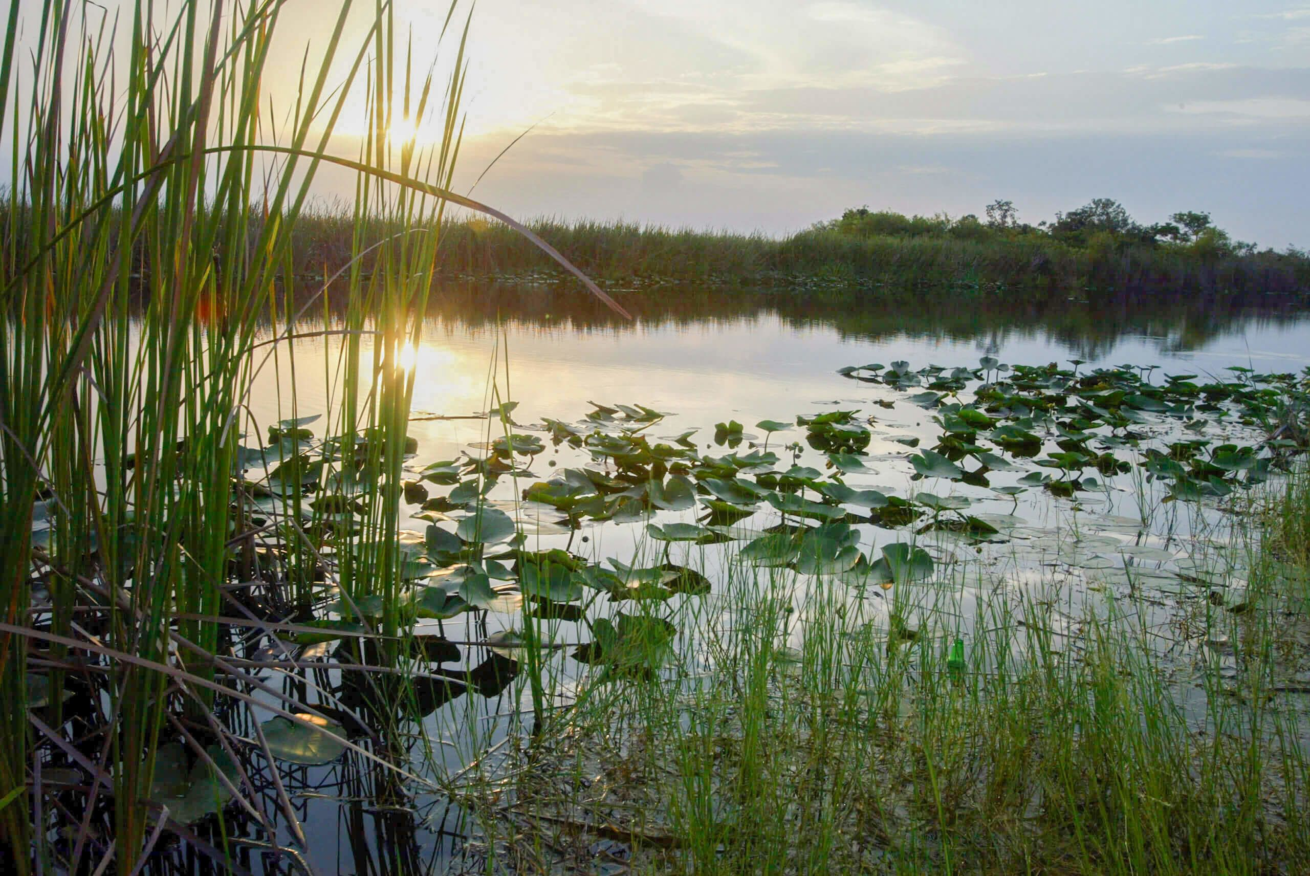 Everglades play a key role in keeping Miami liveable.