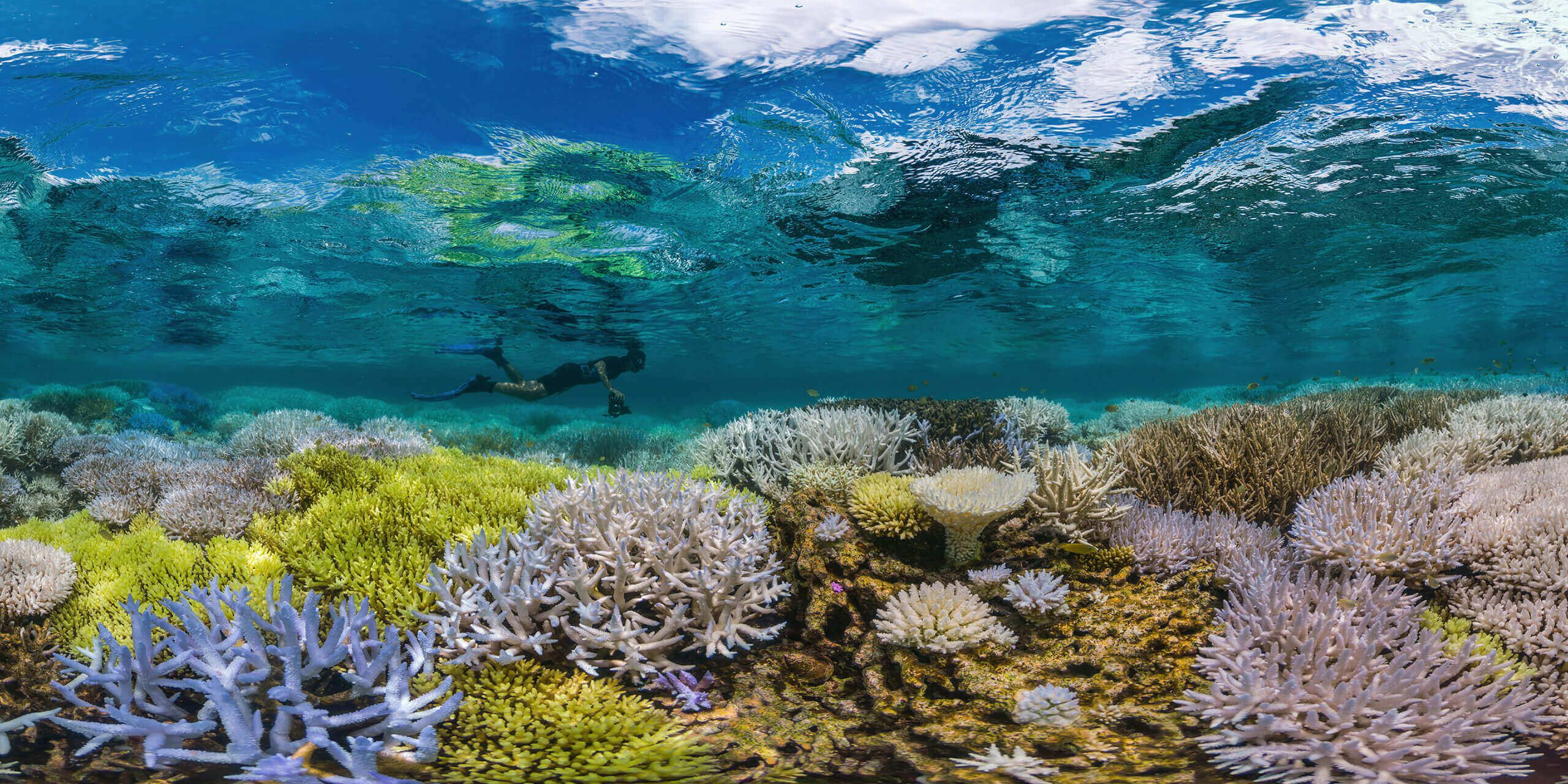 Coral reefs are by many definitions the most biodiverse places on the planet and a huge proportion of marine life depends on them.