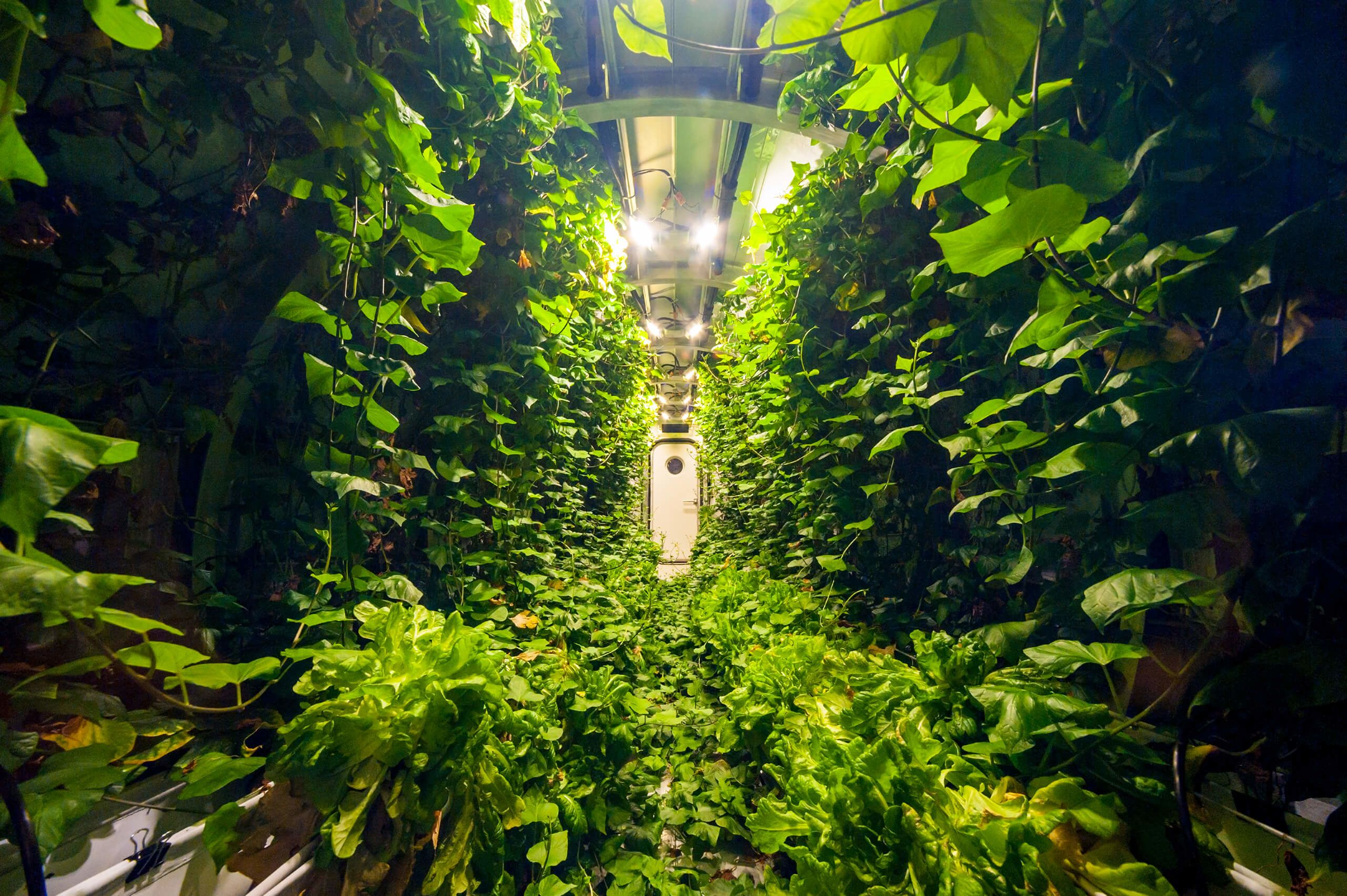 Inside a Mars Lunar Greenhouse unit in Tucson, Arizona.